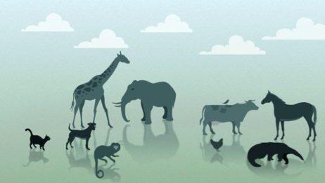 Propaganda de TV em animação 2D e motion graphics